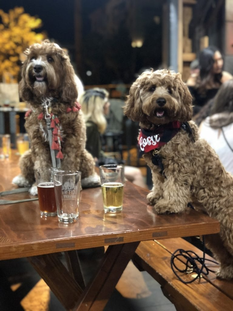 dogs at angel city brewery in la