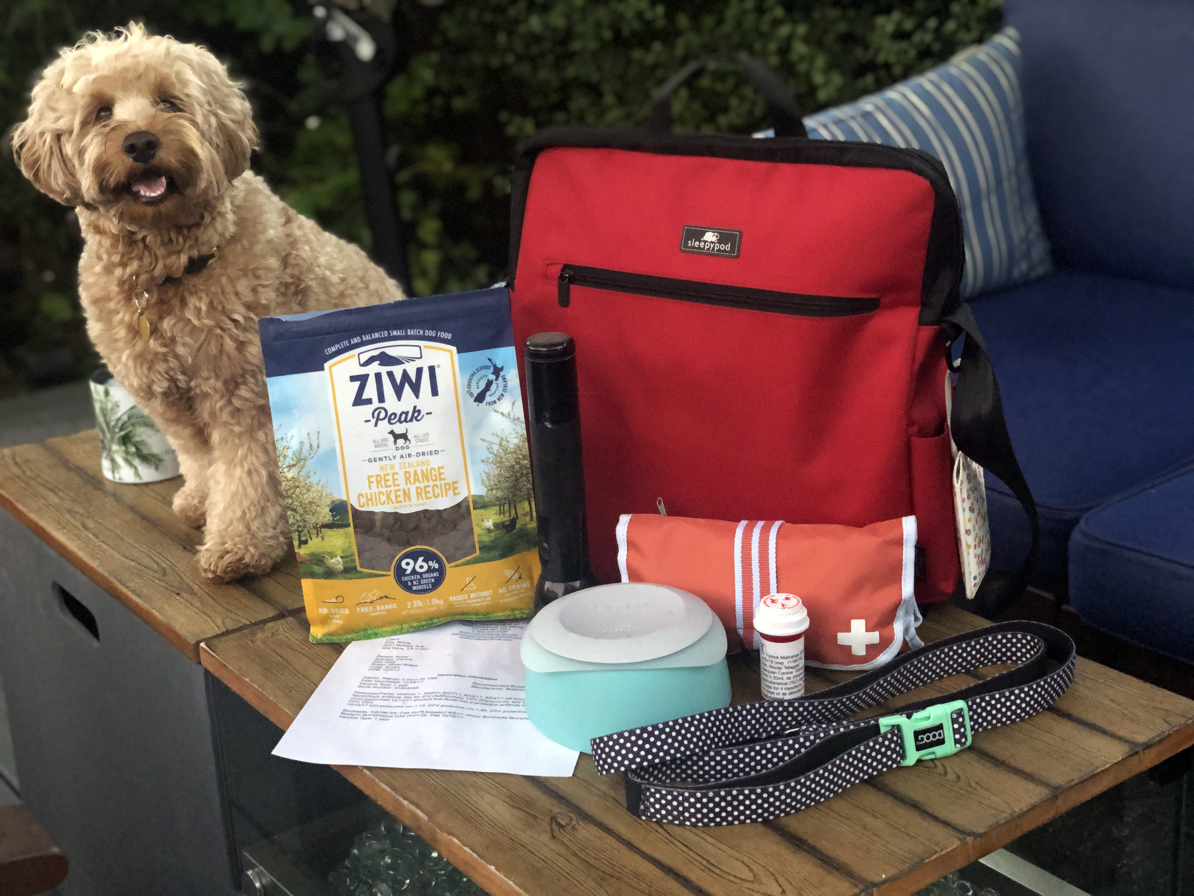 Our favorite pet products from SuperZoo 2019