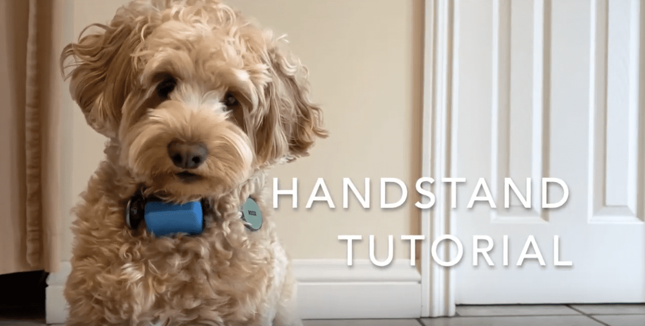 13 Mental enrichment toys for dogs