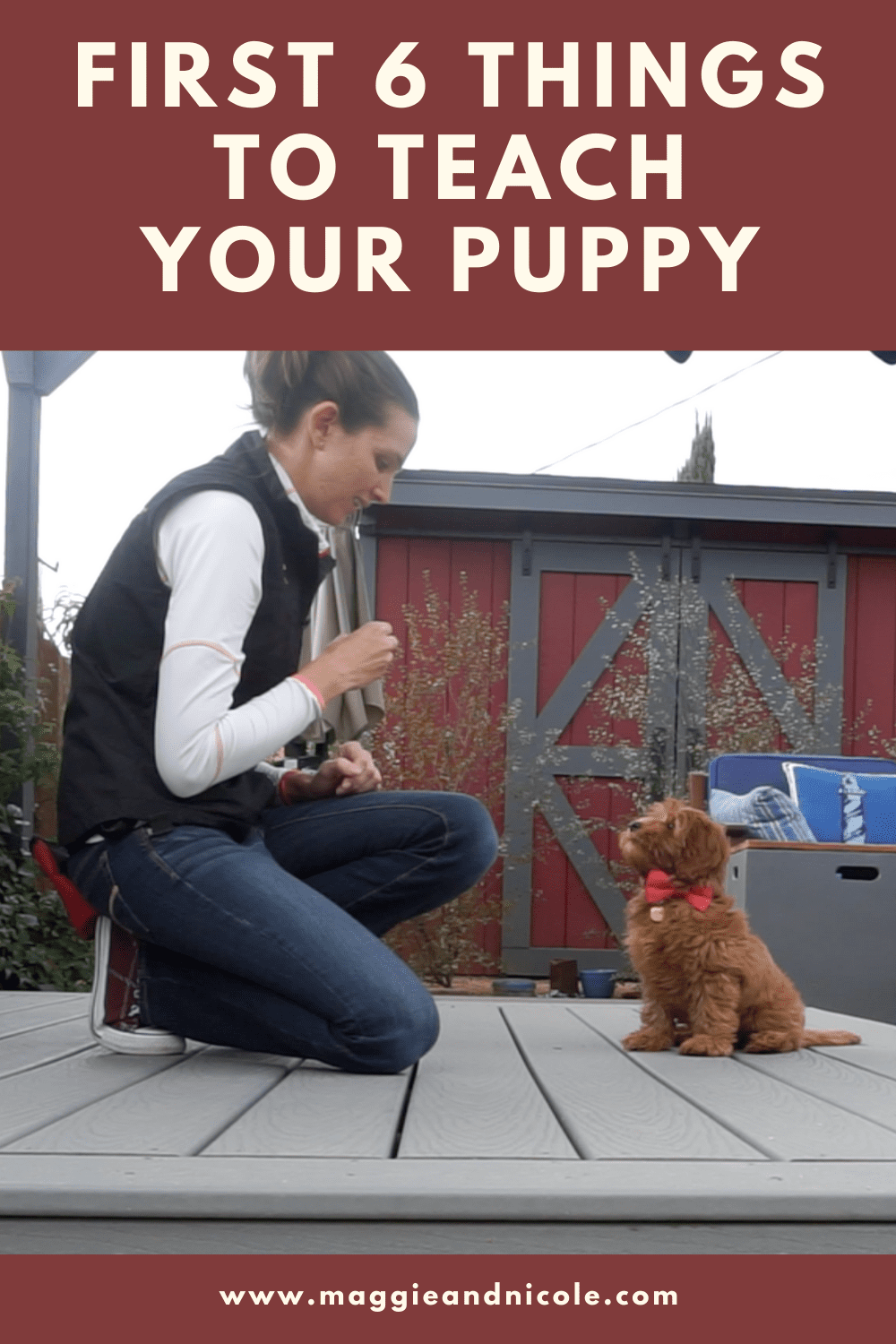 The first things things to teach your new puppy