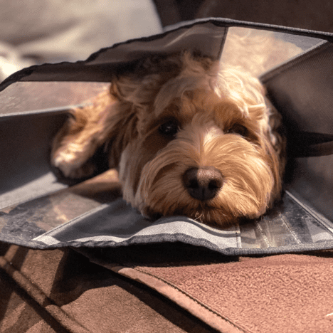 6 ways to successfully slow your dogs eating down