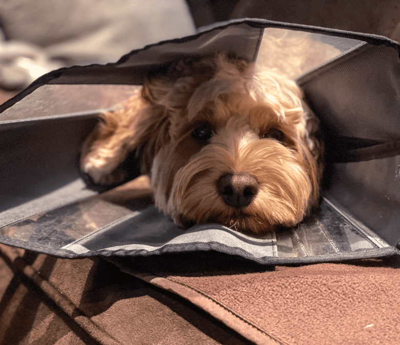 Household items you need to have at home in case of an emergency with your pet