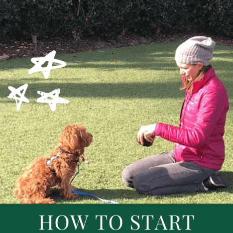 Quickly teach your dog to roll over in 5 mins