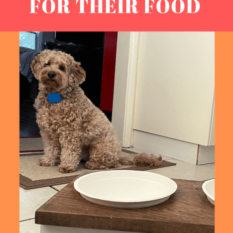 How to potty train a puppy fast and easily