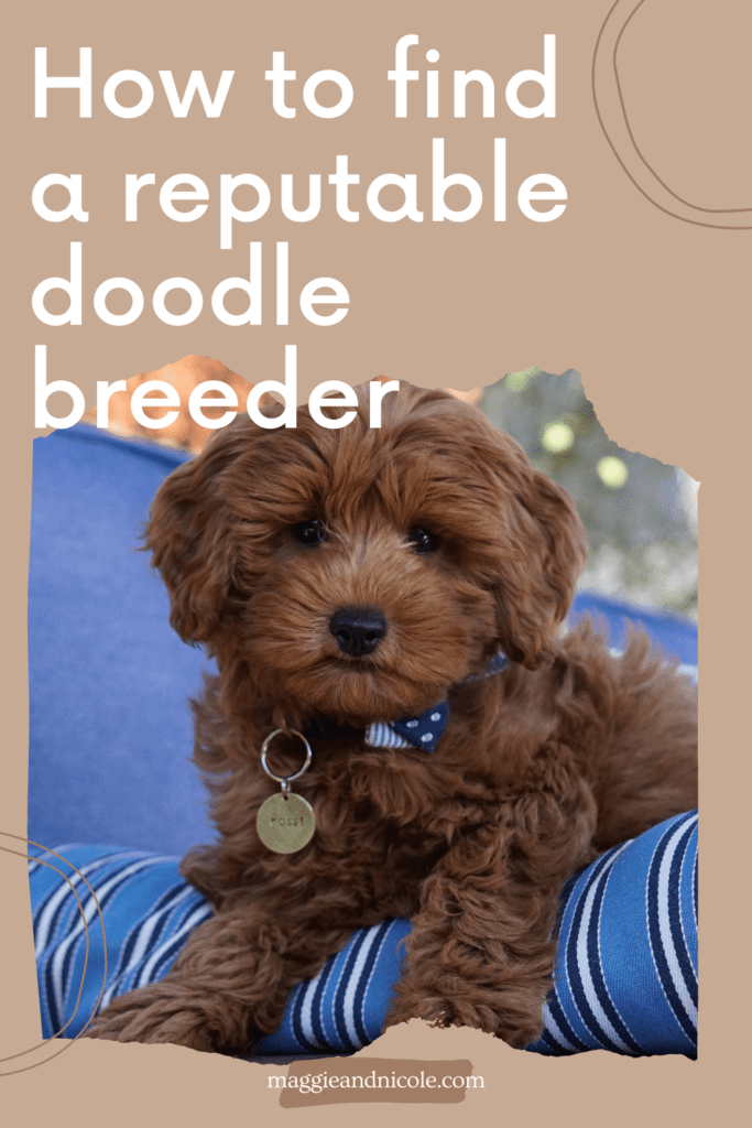 How to find a reputable doodle breeder