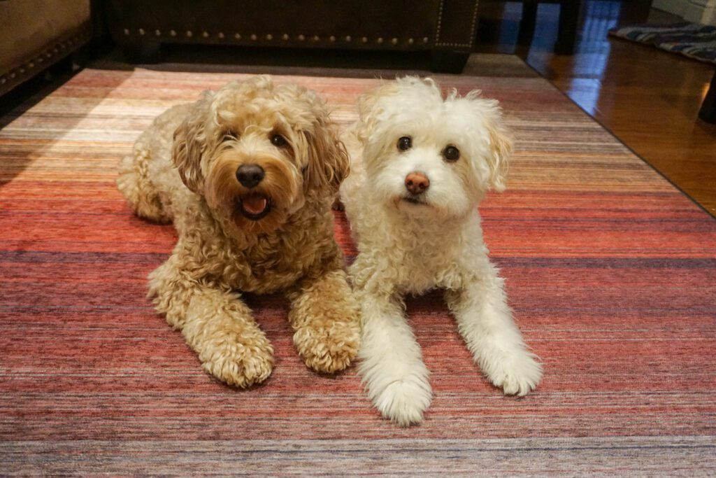 two dogs on ruggables washable rug